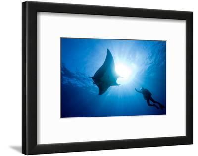 Pacific Manta and Scuba Diver