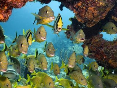 Schooling Fish Under Coral Ledge