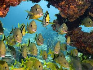 Schooling Fish Under Coral Ledge by Stephen Frink