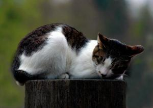 Cat Nap by Stephen Lebovits