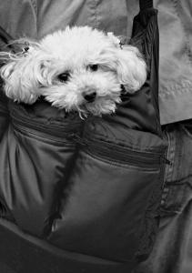 Doggy Bag by Stephen Lebovits