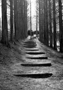 Forest Steps by Stephen Lebovits