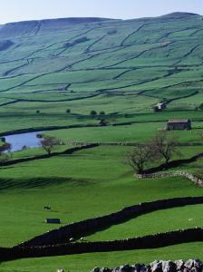 Green Dales and Traditional Stone Walls, England by Stephen Saks