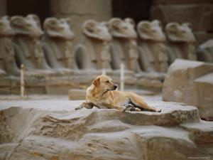 A Stray Dog Rests on the Remnants of a Pedestal by Stephen St. John