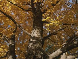 A Tree Trunk Surrounded by Yellow Autumn Leaves by Stephen St. John