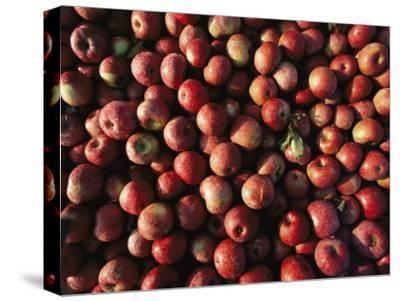 Bins of Apples Glisten with Morning Dew at a Roadside Stand