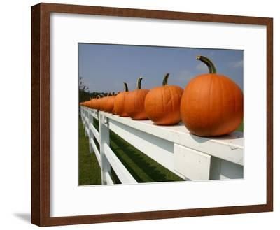 Bright Pumpkins Line a Fence Casting an Autumn Shadow