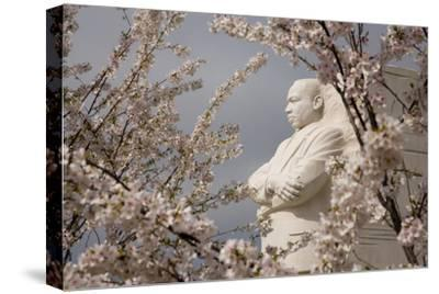Cherry Blossoms Frame the Marble Statue of Martin Luther King