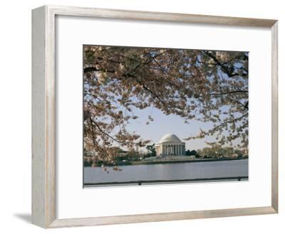 Cherry Blossoms in Full Bloom Frame the Jefferson Memorial Across the Tidal Basin