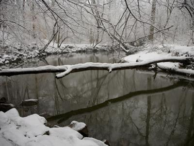 Falling Snow Outlines a Log across Rock Creek During Blizzard of 2010