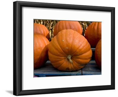 Giant Pumpkins Await Halloween Buyers