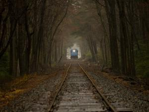 Locomotive Approaches Through a Canopy of Trees by Stephen St. John