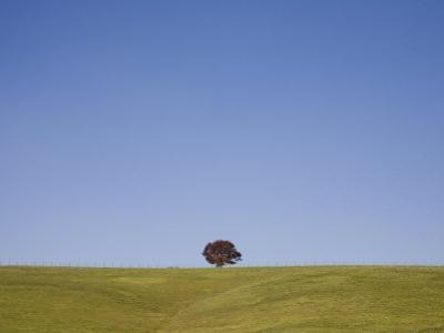 Lone Tree Guards a Ridge on Rolling Virginia Countryside
