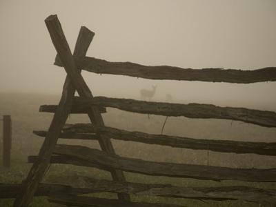 Morning Fog and a Civil War Split-Rail Fence Frame Wild Deer