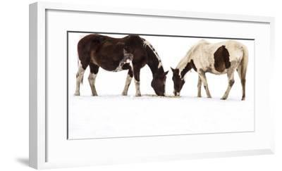 Patterned Horses Resembling Mirror Images, Grazing in the Snow