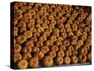 Rows of Little Squash Resembling Miniature Pumpkins Form a Pattern