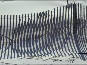 Shadows from Fences Erected to Prevent Beach Erosion by Stephen St. John