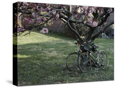 Spring Flowers Frame Two Bicycles Chained to a Tree
