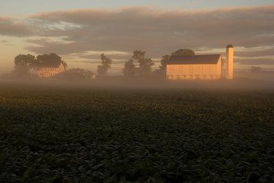 Sunrise Casts a Golden Tint on a Farm and Misty Cornfield