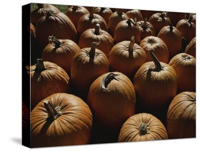 The Slant of Twilight Falls Across a Cluster of Pumpkins