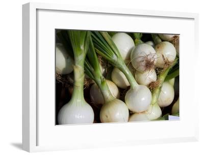 White Onions for Sale, Ready to Add Strong Flavor