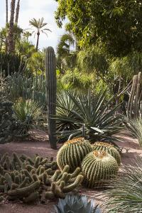 Cacti, Jardin Majorelle, Owned by Yves St. Laurent, Marrakech, Morocco, North Africa, Africa by Stephen Studd