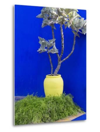 Detail of Potted Plant Against Blue Wall