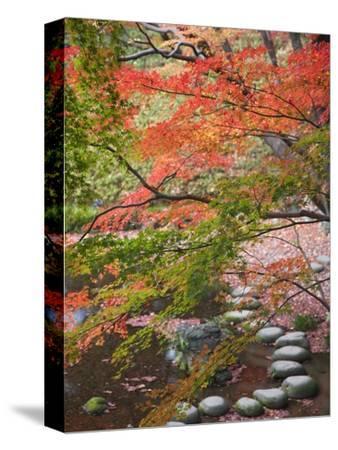 Steppingstones beneath Japanese maple