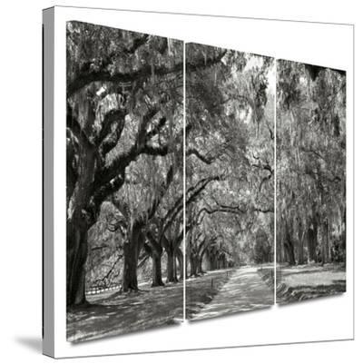 Live Oak Avenue 3 piece gallery-wrapped canvas