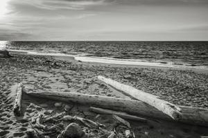 Driftwood on Beach, Fort Worden State Park by Steve Bisig