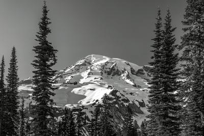 Through the Forest, Mount Rainier
