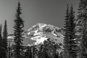 Through the Forest, Mount Rainier by Steve Bisig