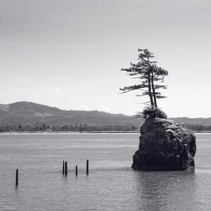Trees on a Rock Island by Steve Bisig