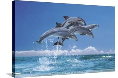 Steve Bloom (Four Dolphins) Art Poster Print--Stretched Canvas Print