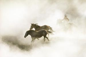 COWBOY ROUNDING UP HORSES IN MORNING FOG by Steve Bly