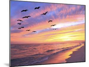 A Flock of Brown Pelicans Fly over the Beach as the Sun Sets by Steve Bower