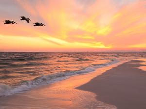 Brown Pelicans Flying in Formation at Sunset on Florida Beach by Steve Bower