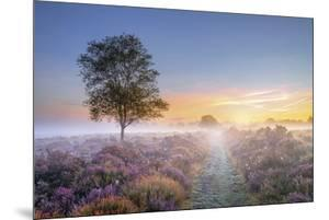 Heath at Dawn by Steve Docwra