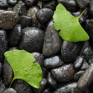 Black Stones And Ginko Leaves Square by Steve Gadomski