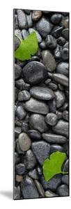 Black Stones And Ginko Leaves Vertical Panorama by Steve Gadomski