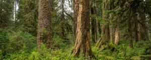 Hoh Rainforest Olympic N P by Steve Gadomski
