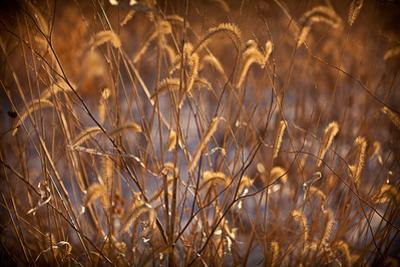 Prairie Grass Blades