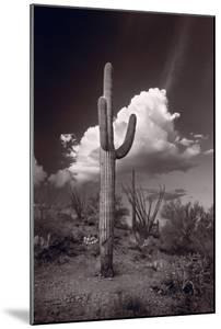 Saguaro Sunset Arizona BW by Steve Gadomski