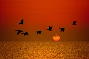 Sunrise Flight by Steve Gadomski