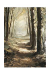 Forest Path Oil by Steve Henderson