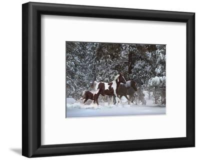 Snowy Runners