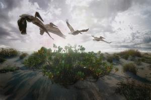 Sunset Pelicans by Steve Hunziker