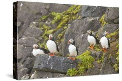 Atlantic Puffin Perched on a Cliff, Spitsbergen, Svalbard, Norway