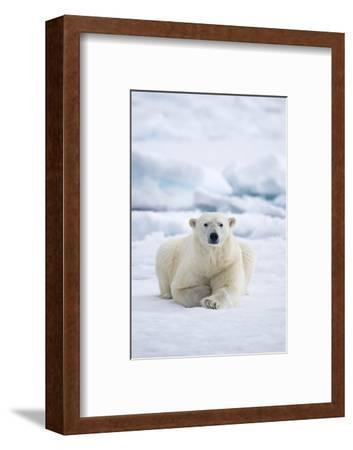 Norway, Spitsbergen. Adult Polar Bear Rests on the Summer Pack Ice