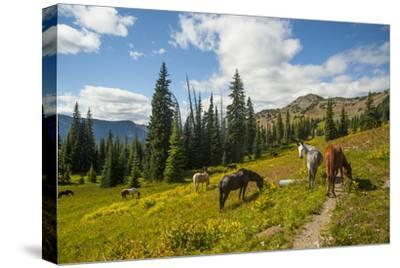 Washington, North Cascades, Slate Pass. Horses and Mules Foraging